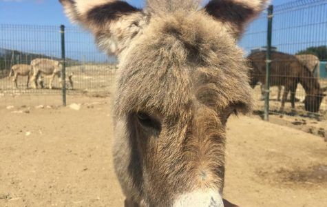 Mission Committee hopes to save donkey